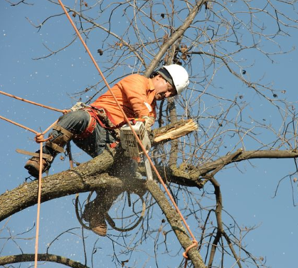 this image shows tree removal in Camarillo