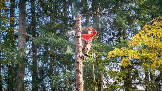 The photo shows an image of commercial tree service in Camarillo, CA.