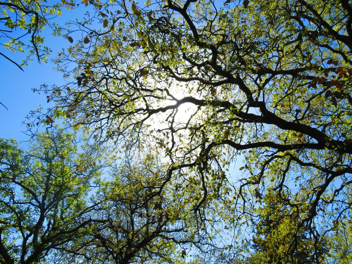 The photo shows the types of tree we service in Camarillo, CA.