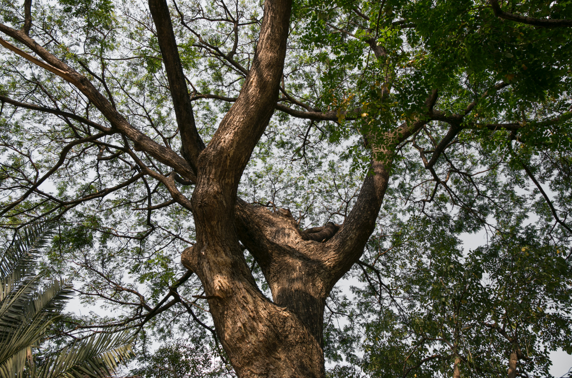 this is an image of commercial and residential tree service in Camarillo