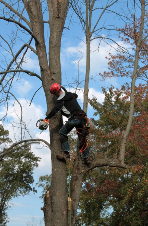 this is an image of emergency tree service in Camarillo
