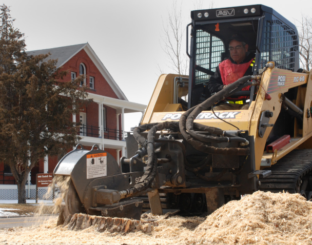 this is an image of stump removal in Camarillo